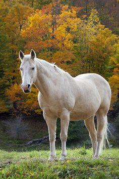 ☀White Horse In Autumn by Brian Jannsen