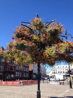 Hanging basket tree in the market place, Darlington