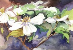 Dogwood - my grandmother loved them too!