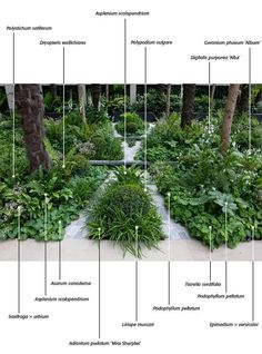 Shade plants. Lesson from this image - if all are same color and similar in form,   dozens of different plants can be planted together without looking too chaotic. But wherever something stands out -by height or form or color or leaf shape - it needs to be part of an organized plan.