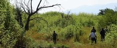 Mexico Is Looking For 43 Missing Students. What Has Been Found Is Truly Terrifying  --- The Huffington Post