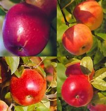 Duo Kinder- Apfel: Discovery, Nela, Topaz, Rubinola im 7,5 Liter Topf, M9
