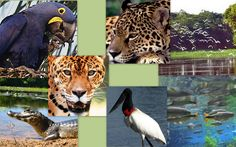 Pantanal   http://4.bp.blogspot.com/-m7aoQJNO064/TgvfX_3FPfI/AAAAAAAAAZA/nXuWxLgULus/s1600/Pantanal1.jpg