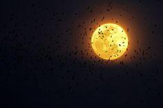 Moon &  bats