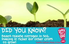 Beans are good for the earth! #Soil #Beans #Crop