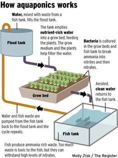 Aquaponics is a method of hydroponics in which fish waste is used for nutrients.
