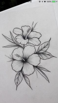 Hibiscus flower _ / / _ Illustration _ Drawing _ Flower print _ Wall decoration… – Flower Tattoo Designs Flower Tattoo Designs – flower tattoos – flower tattoos – Tattoo World Easy Flower Drawings, Pencil Drawings Of Flowers, Flower Sketches, Cool Art Drawings, Pencil Art Drawings, Art Drawings Sketches, Drawing Flowers, Drawing Ideas, Painting Flowers