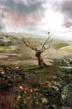 This Spectred Isle - by D McConochie / English Countryside Landscape Print / Collage Wall Art /Crow on Solitary Tree / Moody Landscape Art And Illustration, Illustrations, Countryside Landscape, Sense Of Place, Landscape Prints, English Countryside, Pretty Pictures, Pretty Pics, The Guardian