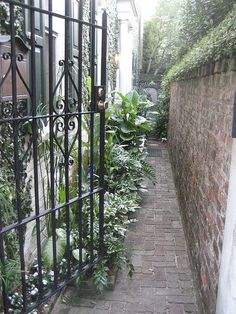Beautiful Charleston, SC. Anywhere you walk you will find something so beautiful to look and see