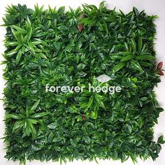 Vertical Gardens Australia specialises in the design and installation of interior & exterior vertical plant walls and decorative screens to fully utilise and beautify limited garden space. Vertical Plant Wall, Decorative Screens, Vertical Gardens, Wall Installation, Garden Spaces, Hedges, Interior And Exterior, Melbourne, Walls