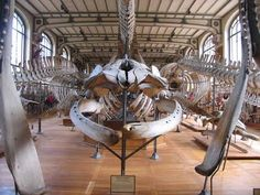 paris palentology museum | The first level contains the vertebrate fossils from the Cambrian ...