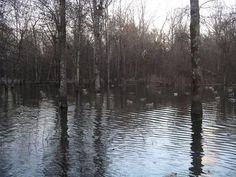 Desha County, Arkansas