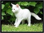 Liście, Biały, Kotek