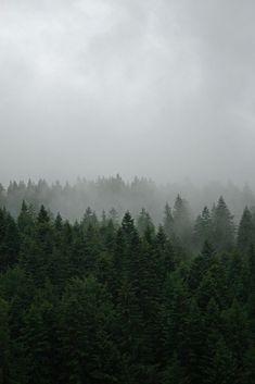 Kırık Kaburgalar Cehennemi'ni Wattpad'de @signoraelsa hesabında bulabilirsiniz.♥️ ∙ #kayrayertaş #arasşahzarin #kırıkkaburgalarcehenemi Beautiful World, Beautiful Places, Beautiful Norway, Beautiful Pictures, Carpathian Forest, Natur Tattoos, Nature Landscape, Misty Forest, Forest Art