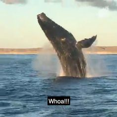 Whao & Must Watch Whale & Compilation - Marie cuoc Cute Funny Animals, Cute Baby Animals, Nature Animals, Animals And Pets, Beautiful Creatures, Animals Beautiful, Delphine, Ocean Creatures, Pet Birds