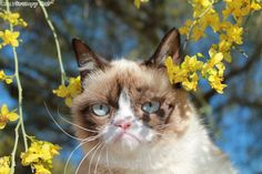 "Grumpy cat ""enjoying"" a beautiful spring day."