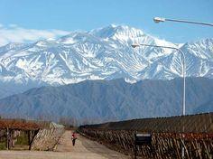 Montañas y Viñedos en Bodega Norton de Mendoza