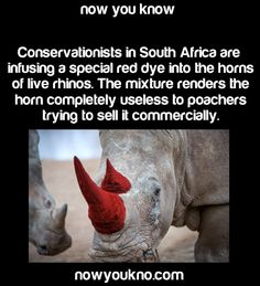 ooooh...now our Rhinos look even more bad ass!!! STOP RHINO POACHING!!!!!