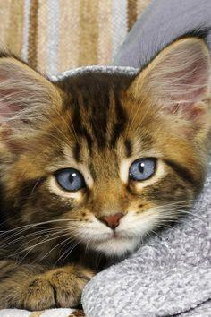 most beautiful blue eyes