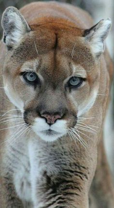 ",, BEAUTIFUL "" — angel-kiyoss: Puma."