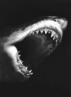 I love sharks!!!    aspirethesenses:    Contemporary visual art, unedited (by:Richard Longo)