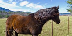 Stop Burning Horses to Make Them Prance ! PLEASE SIGN ! ! - Care2 News Network