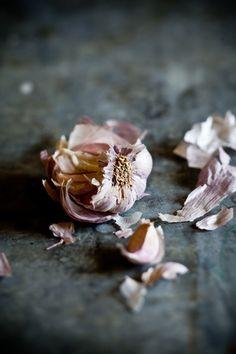 Garlic | Tartelette - Helene Dujardin