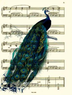 Peacock Art, French Peacock Art Print, Music Sheet Art, Mixed Media Collage, Wall Decor Wall Art. $10.00, via Etsy.