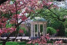 Chapel Hill, NC...final destination
