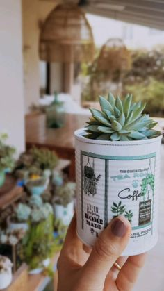Succulents In Containers, Container Plants, Succulent Arrangements, Decoupage, Botany, Planter Pots, Menu, Homemade, Wii