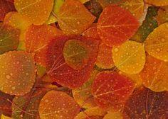 Fall-Leaves-HD-Wallpaper-2560x1600