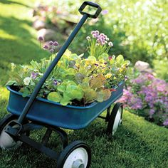 salad garden grown in a repurposed wagon -- fast food?!?!?