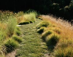 John Greenlee – Size Doesn't Matter. A meadow with a mix of grasses chosen for different uses. Carex pansa (on the path) is a ground cover grass suitable as a lawn replacement. Pennisetum spathiolatum (at R) produces lacy brown stalks about 18-inch-high clumps of green.  Spartina bakeri (L) is evergreen and will grow as tall as 4 feet.  | gardenista