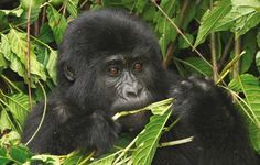 Top things to do in Uganda - Lonely Planet