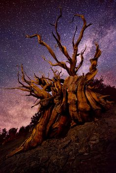 Breathtaking Landscape Photography by Doug Solis - Inspiration Grid Beautiful Landscape Pictures, Beautiful Landscapes, Beautiful Scenery, Landscape Photography, Nature Photography, Bristlecone Pine, Grid Design, Jolie Photo, To Infinity And Beyond