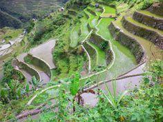 #Filippine #risaie che sembrano un'opera d'arte
