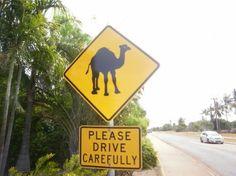 Broome Photos - Featured Images of Broome, Kimberley Region Broome Western Australia, Australia Funny, Camels, Heaven On Earth, Heartland, Capital City, Perth, Elephants, Trip Advisor