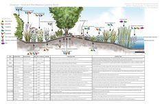 wetland design - Google Search
