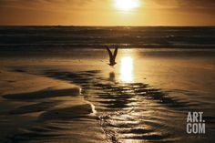 Sunset Bird Photographic Print by Vitaly Geyman at Art.com