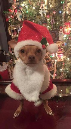 Christmas Santa Chihuahua Dog