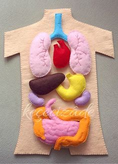 3D Human Anatomy Felt Set; Such a fun resource for learning about the human body!