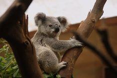 Der Contentbär SEO Contest 2021 Public Domain, Bear Spirit Animal, Gemini, Für Dummies, Alphabet Photos, Animal Species, Animal Facts, Wildlife Nature, Animals Of The World