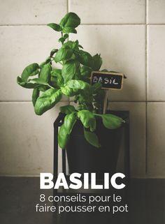 8 choses à savoir pour faire pousser du basilic en pot - Mon Petit Balcon Garden Water Fountains, Water Garden, Herb Garden, Playground Flooring, Diy Playground, Garden Deco, Balcony Garden, Potager Palettes, Landscape Design