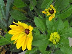 Marian's Hunting Stories, etc., etc., etc...: Some Sunday Flowers