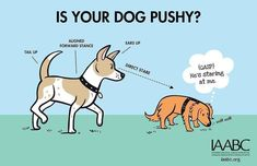 Dog Organization, Organizing, Dog Body Language, Dog Poster, Dog Signs, Dog Agility, Dog Park, Losing A Pet, Dog Behavior