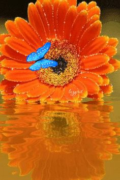 Butterfly on a sunflower! Beautiful Butterflies, Beautiful Flowers, Beau Gif, Art Quilling, Butterfly Gif, When Youre In Love, Sunflowers And Daisies, Glitter Gif, Le Web