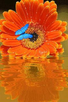 GIFS HERMOSOS: flores y paisajes encontradas en la web