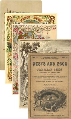 Vintage Labels, Vintage Ephemera, Vintage Paper, Graphics Vintage, Ephemera Printables Free, Templates Printable Free, Printable Art, Handmade Journals, Vintage Journals