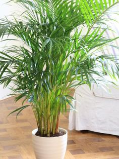 Many foliage plants grow on shady rain forest floors and so will cope well in a north-facing room, especially if you mist them regularly to imitate their natural environment.