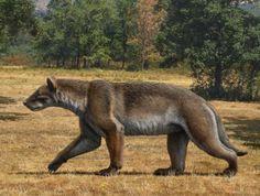 Ancient Bear Dog - Magericyon anceps